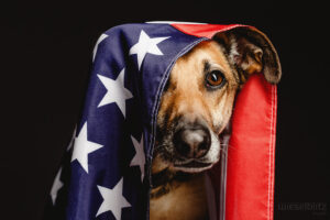Pet Photography – Tips